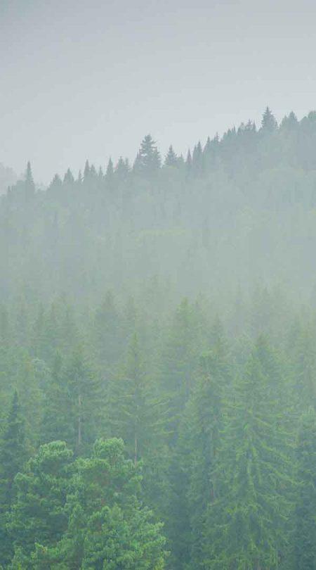 wald-im-nebel-guenstiger-bestatter-in-nrw